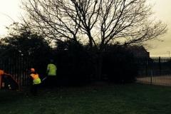 work-to-tree-e-800x600